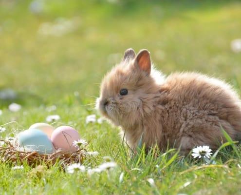 Ostern in Termen